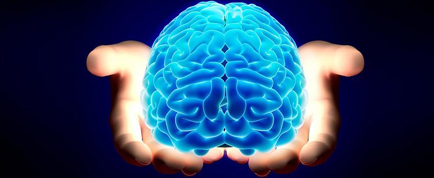 facts_human_brain_leverage_marketing_success
